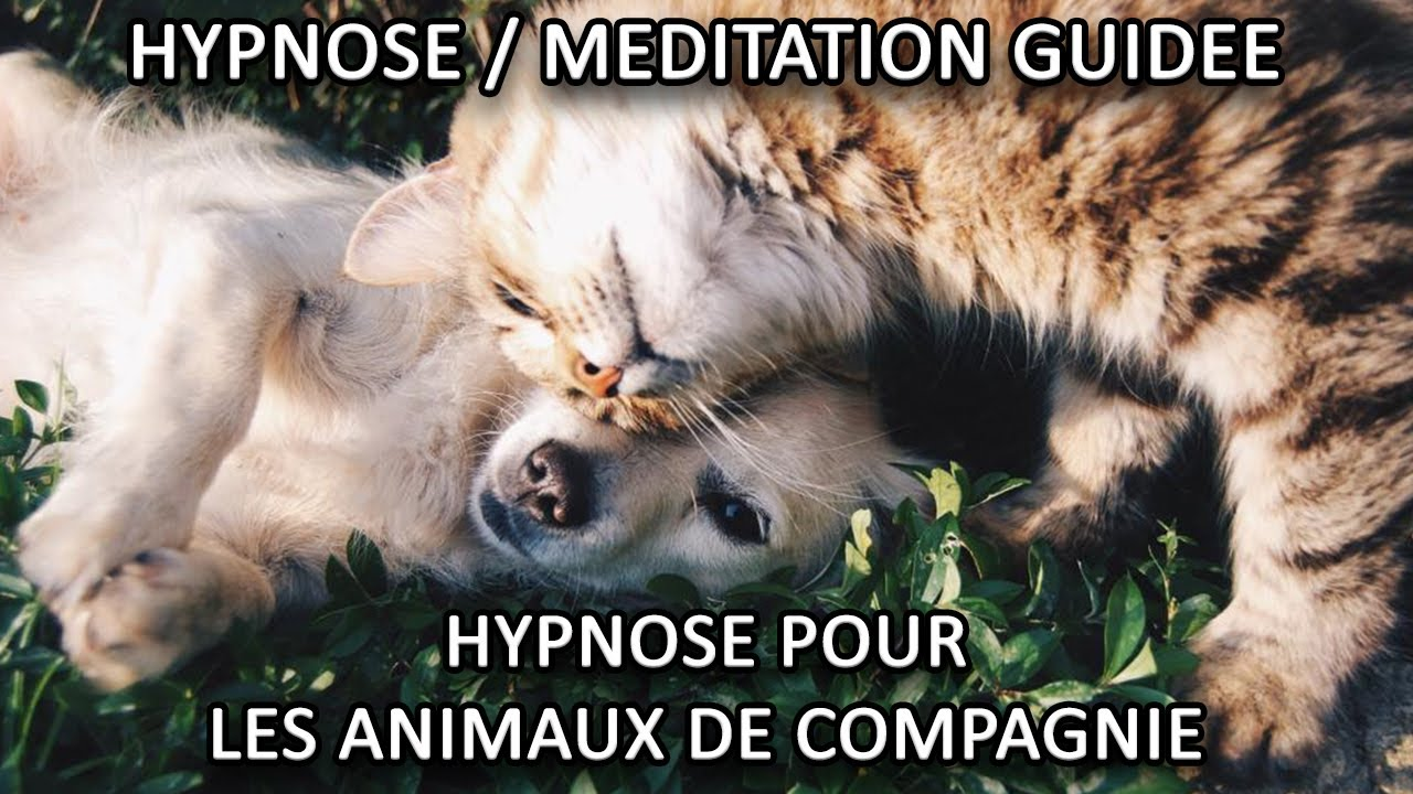 Hypnose animaux